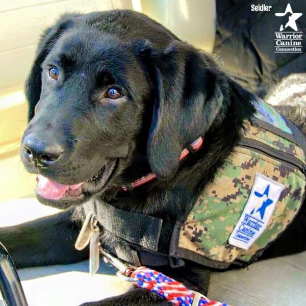 Service dog Seidler