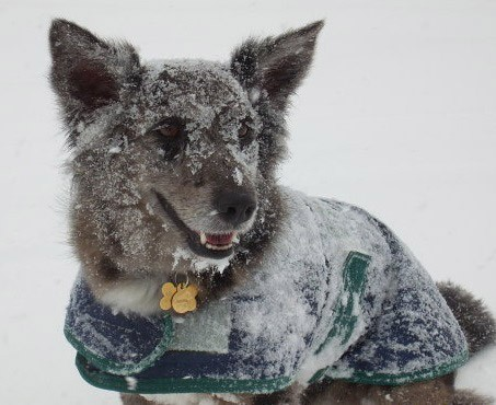 A Dog enjoying the snow