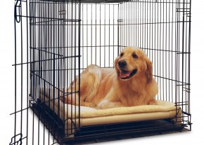 A Kuranda Crate Bed