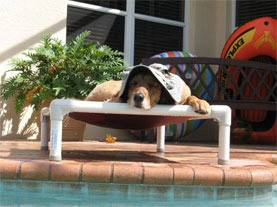 Dog on a Kuranda Bed by the pool