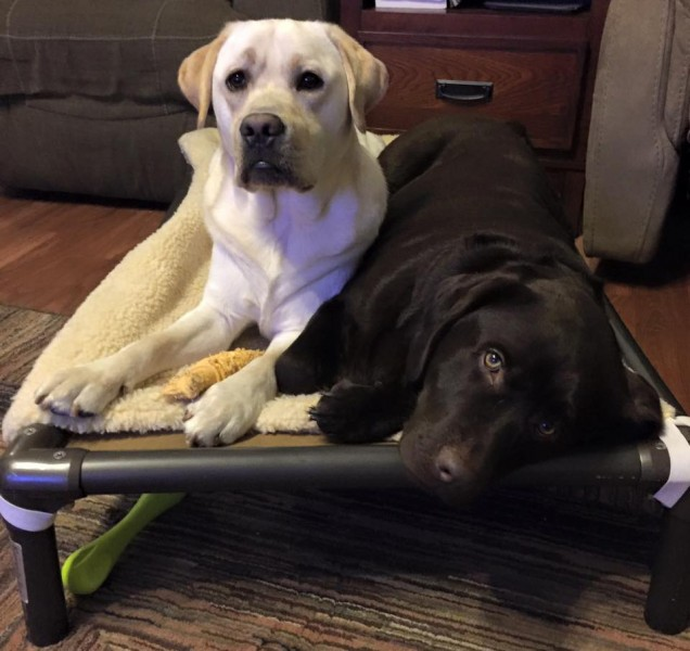 Sharing a Kuranda Dog Bed