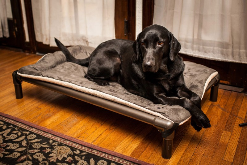 Keep the furniture clean with a Kuranda bed