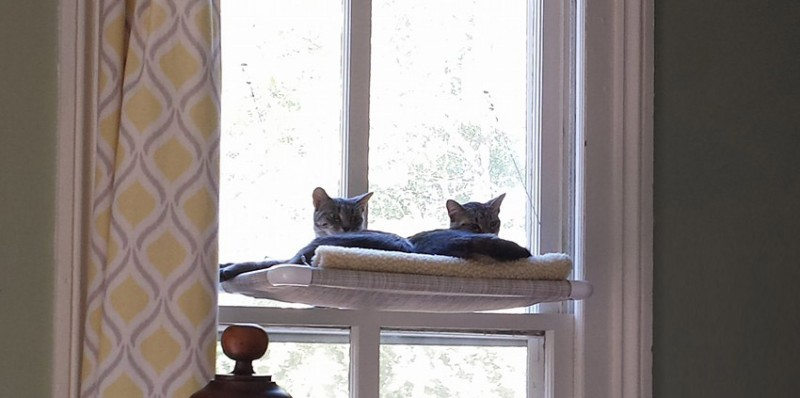 Two Cats on a Kuranda Kitty Cot