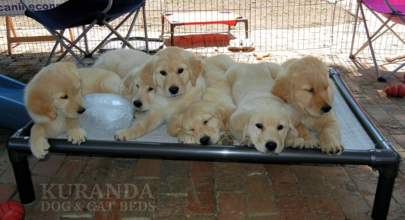 Elevated Dog Beds are great for keeping dogs cool