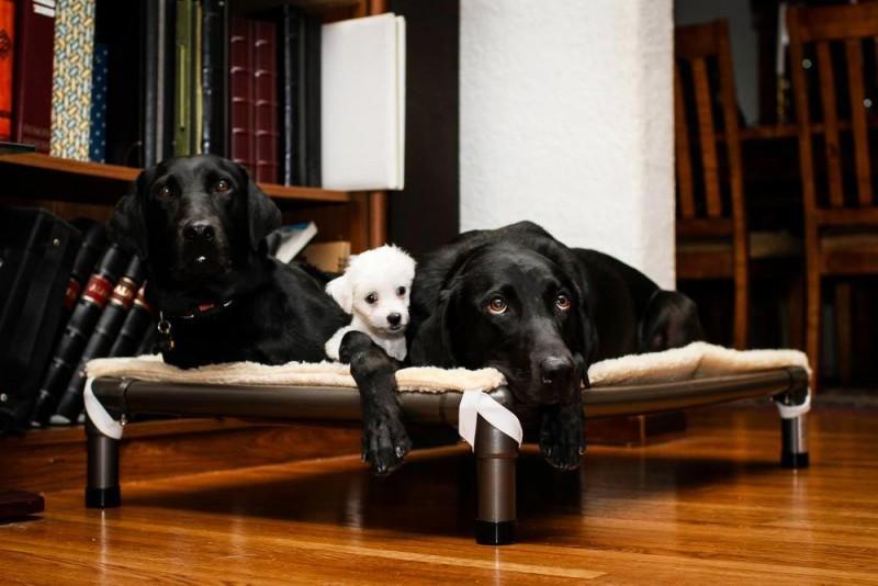Dogs resting on a Kuranda Fleece Pad