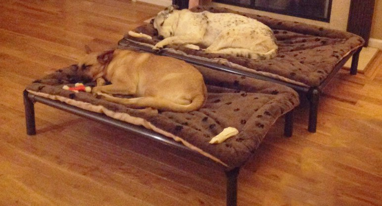 Dogs resting on a Kuranda bed