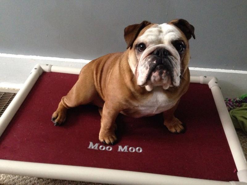 Moo Moo's Personalized Kuranda Bed