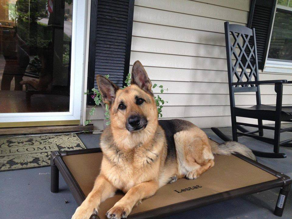 German Shepherd Dog Beds Kuranda Dog Beds