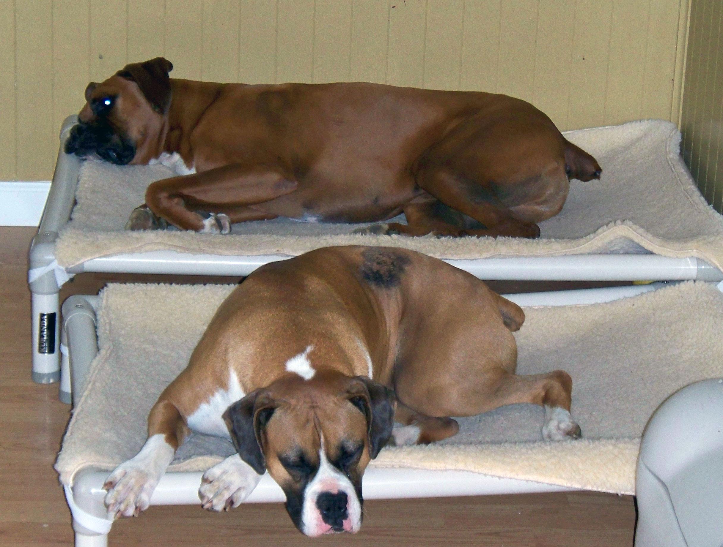Boxer Dog Beds   Kuranda Dog Beds®