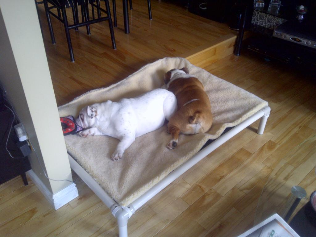 English Bulldog Dog Beds   Kuranda Dog Beds®