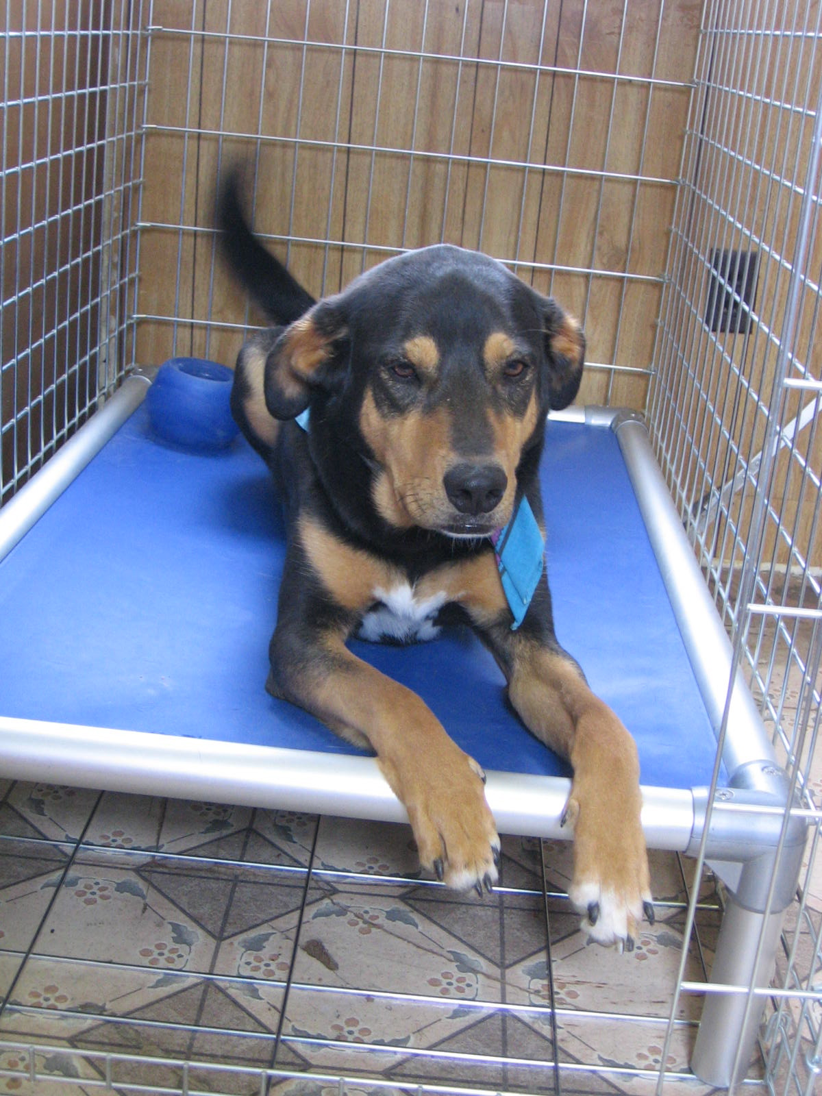 Rottweiler Dog Beds Kuranda Dog Beds
