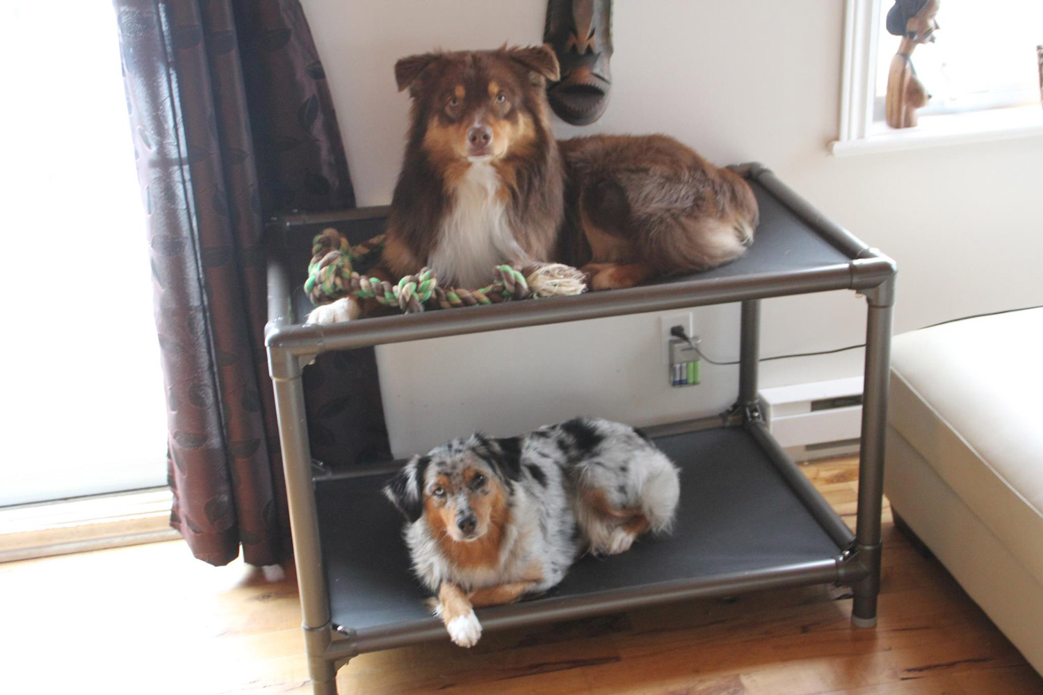 Standard Dog Bunk Bed Kuranda Dog Beds
