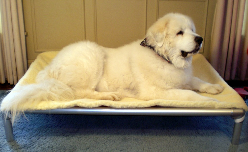 Large Dog Beds Kuranda Dog Beds