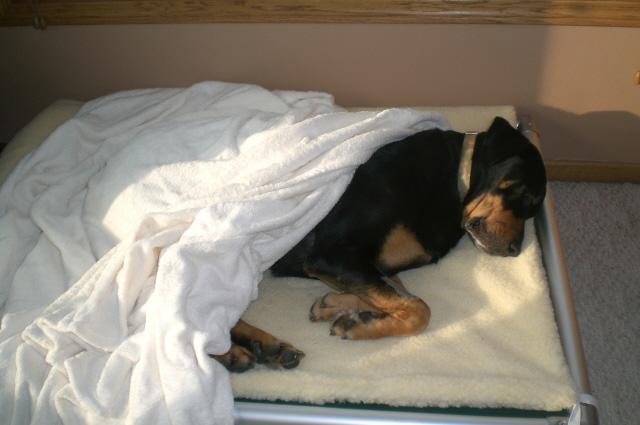 Orthopedic Dog Beds Kuranda Dog Beds