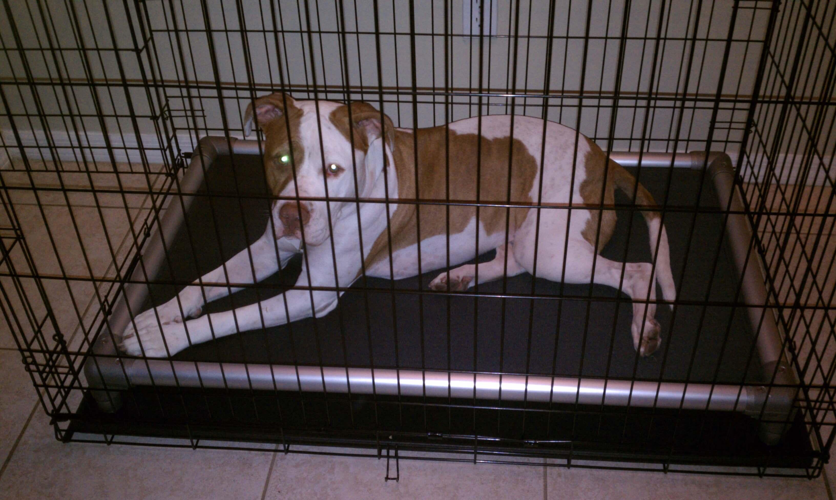 Crate Beds Testimonials Kuranda Dog Beds Kuranda Dog Beds