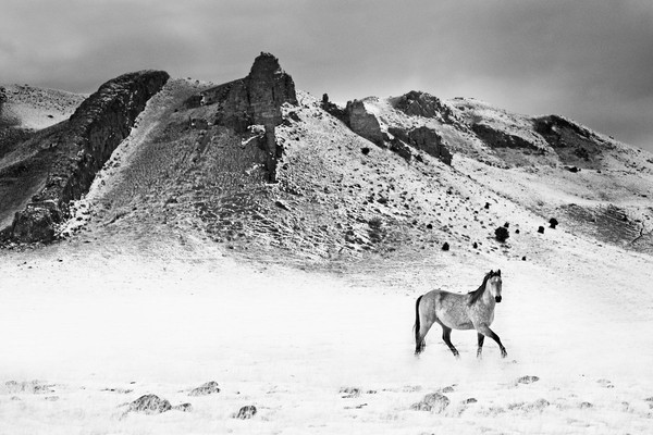 Montana Horse 01