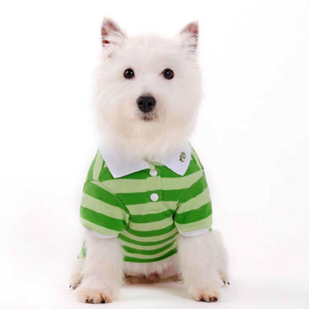 Dogo Dog Stripe Polo Shirt Green - Free Shipping