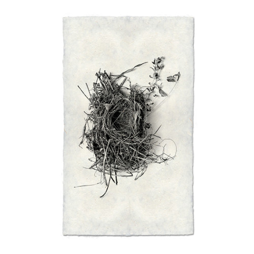 Bird Nest Study Print #1