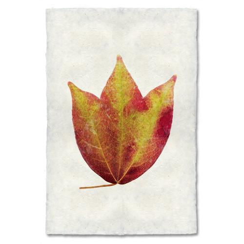 American Cranberry Leaf Study Print