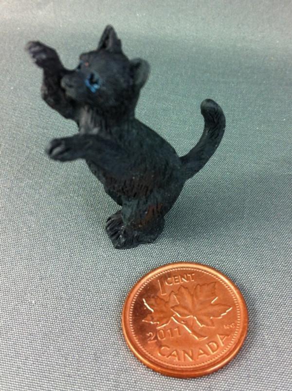Poppy the Black Cat