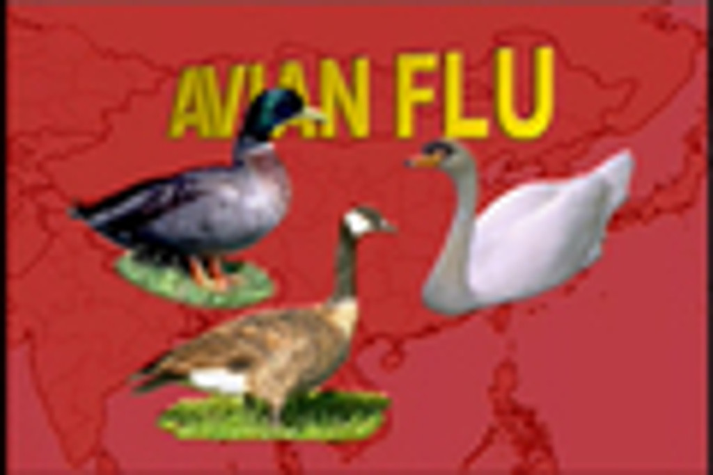 Protect Your Family From Deadly Bird Flu (Safety Video) DVD