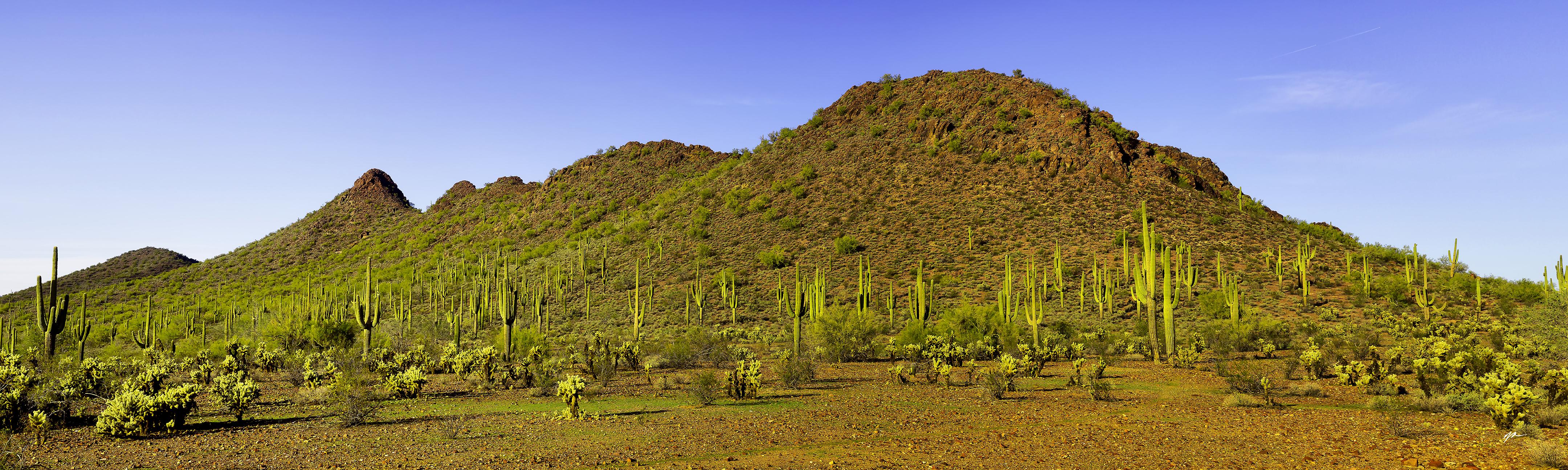 Sonoran Desert Panoramic