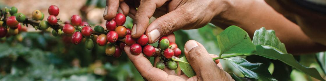 coffee-farmer.jpg