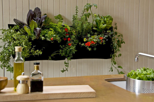 All You Need to Know about Starting An Indoor Garden