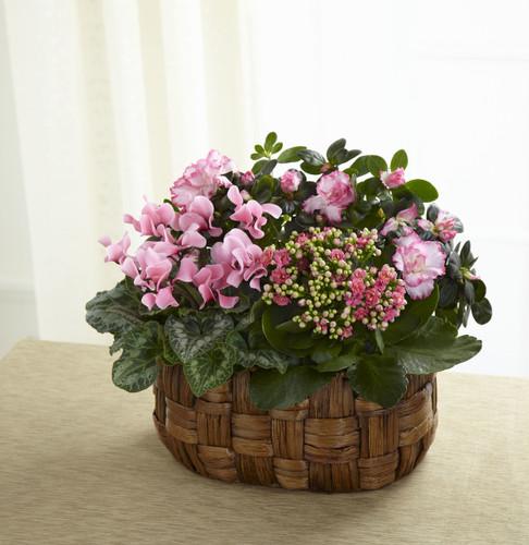 Plant basket Assortment Florist Long Island NY