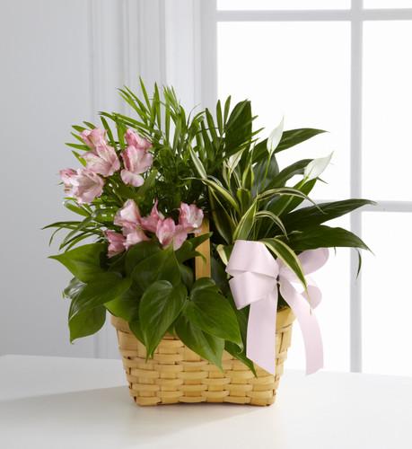 The Living Spirit Dishgarden Flowers Long Island
