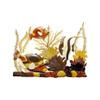 Humuhumu & Angelfish
