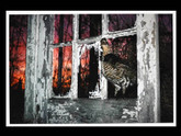 Barbara P. Norfleet: Ruffed Grouse and Abandoned House, Signed Color Print