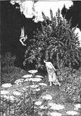 A Midsummer Night's Dream, William Heath Robinson Illustrations, Deluxe LE