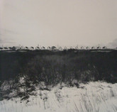 Water's Edge by Harry Callahan, Signed First Edition