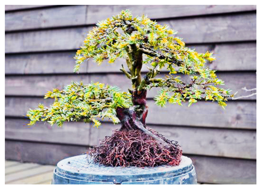 ​Bonsai Pot Selection From a Different Perspective