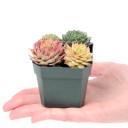 Square Plastic Pot Size Reference