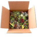 Succulent Unrooted Cuttings - Assorted - Bulk Box