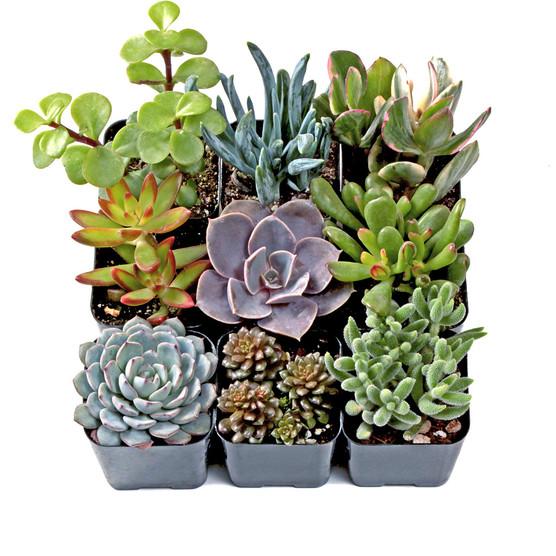 Rock Garden Soft Succulent Set - Winter