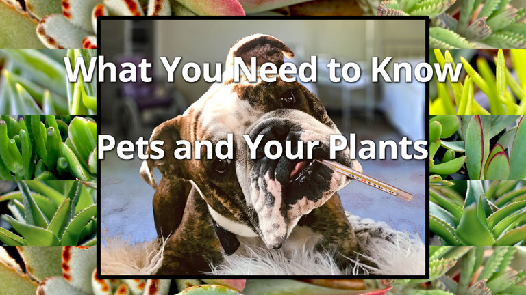 Pets and your plants, what you need to know.