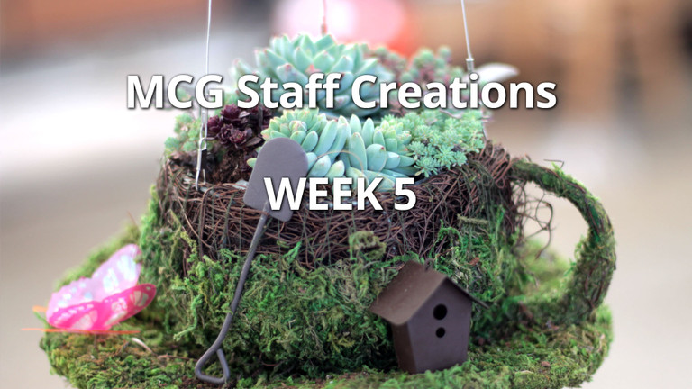 Employee Succulent Creations at Mountain Crest Gardens, Week 5