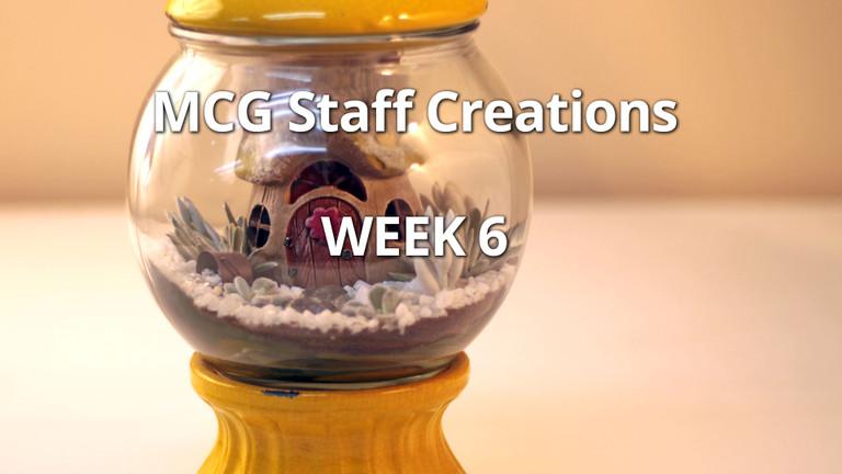 Employee Succulent Creations at Mountain Crest Gardens, Week 6