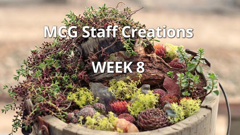 Employee Succulent Creations at Mountain Crest Gardens, Week 8