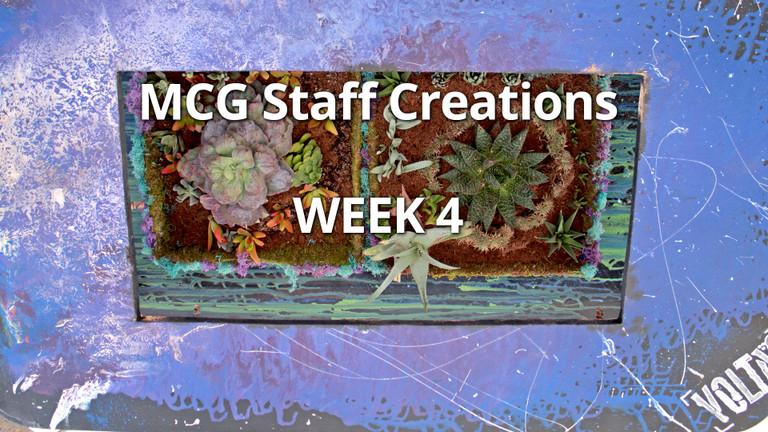 Employee Succulent Creations at Mountain Crest Gardens, Week 4