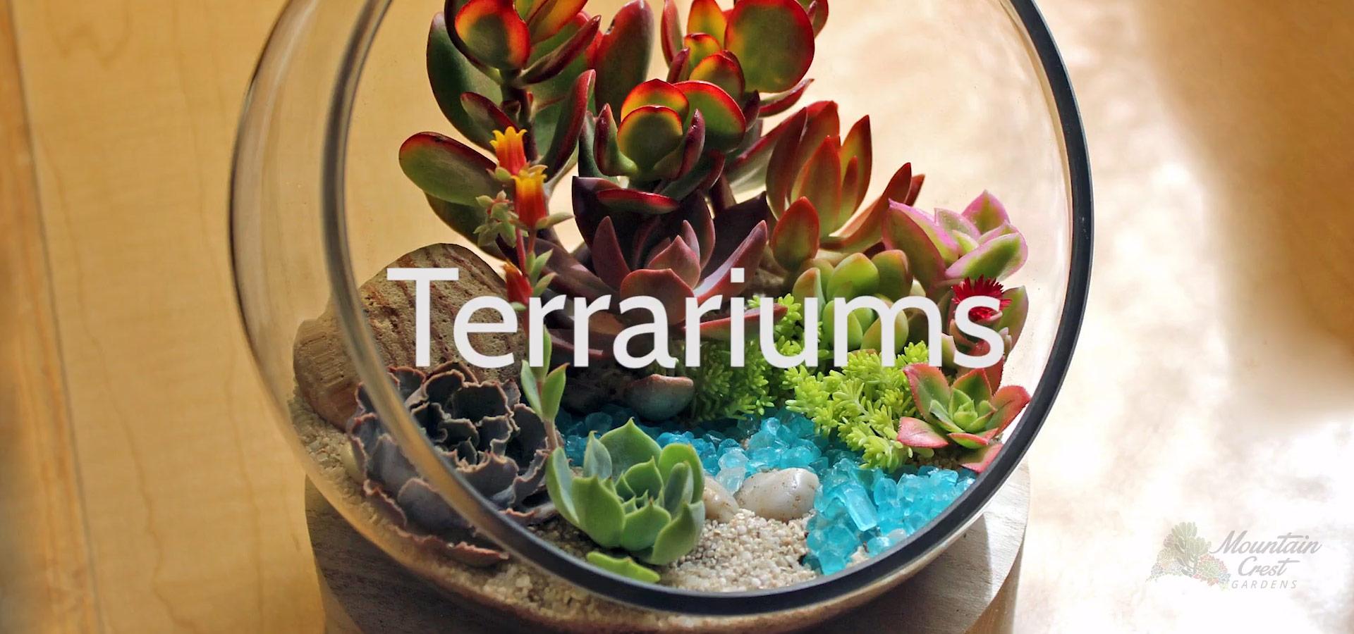 Intro to Terrarium Succulents