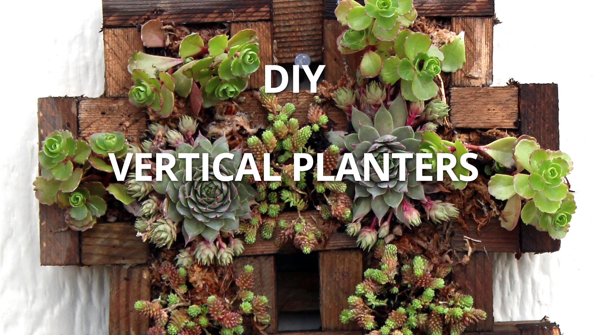 How to make a Vertical Planter with Sedum and Aeonium (video ...