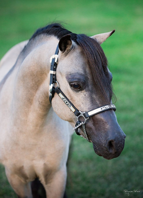 Gold Chains For Sale >> Mini Express Miniature Horse Equipment