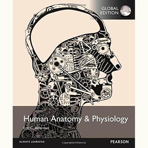 Human Anatomy & Physiology (1st Edition) Erin Amerman IE