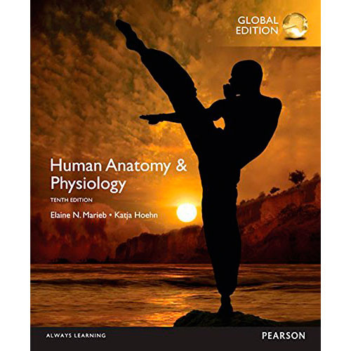 Human Anatomy & Physiology (10th Edition) Marieb IE