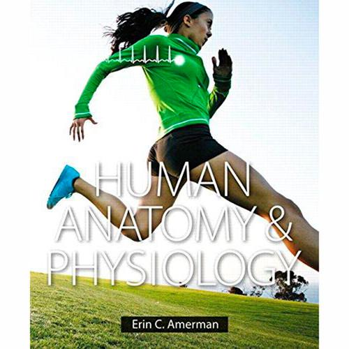 Human Anatomy & Physiology (1st Edition) Erin Amerman