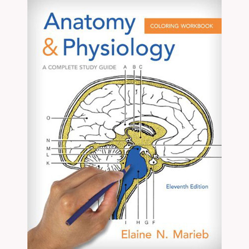 Anatomy and Physiology Coloring Workbook: A Complete Study Guide (11th Edition) Marieb